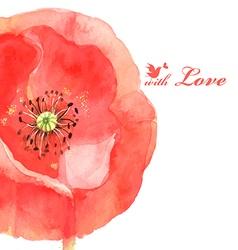 flower poppy love bird vector image