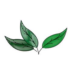 Leaves nature botanical foliage plant vector