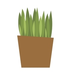 Spring colorful garden grass in pot vector