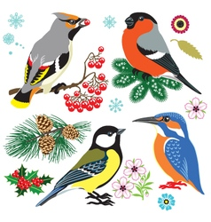 Set of wild birds vector