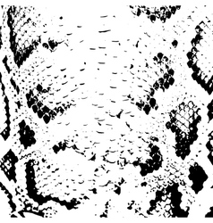 Snake skin abstract texture black on white vector image vector image