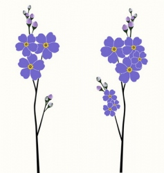 Beautiful forget-me-nots vector