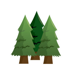 forest pine trees foliage natural trunk icon vector image vector image