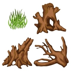 Bizarre tree roots and tuft of grass four items vector