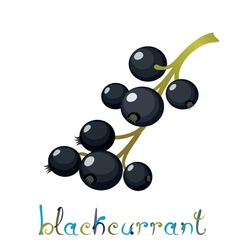 Black currant berry vector
