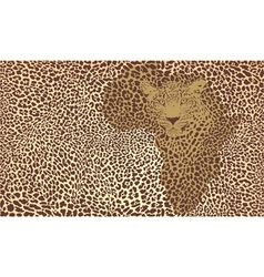 Background of the African jaguar vector image vector image