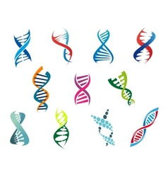 DNA molecules and symbols vector image vector image