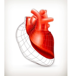 Heart structure vector image