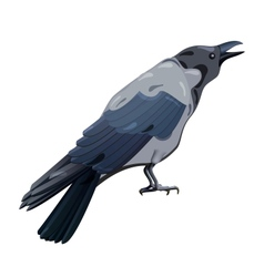 Hooded crow vector