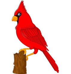 Red Cardinal sitting on a tree branch vector image