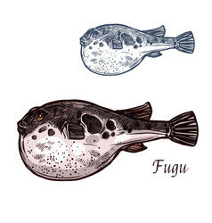 fugu fish sketch of japanese pufferfish vector image