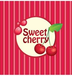 sweet cherry vector image
