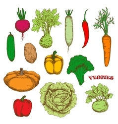 Colorful organically grown fresh vegetables sketch vector