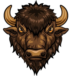 Cartoon of head bison mascot vector image