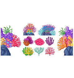 different types of coral reef vector image vector image