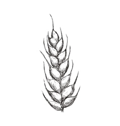 Wheat ears icon grain design graphic vector