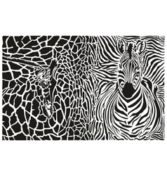 Background with zebra and giraffe vector image vector image