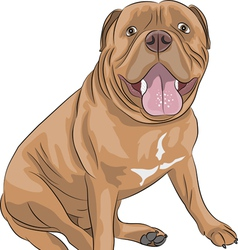 Dogue de Bordeaux a vector image