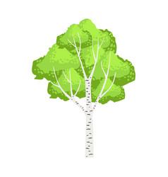 Green birch tree colorful cartoon vector