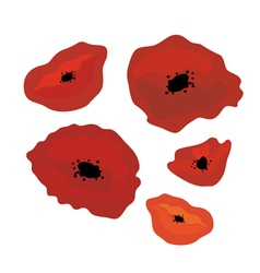 poppies vector image vector image