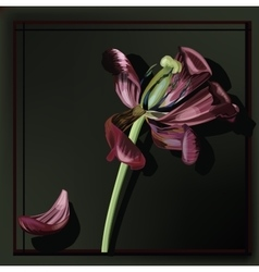 Image of tulip faded vector