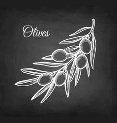 chalk sketch of olive branch vector image vector image
