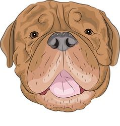 Dogue de Bordeaux vector image vector image