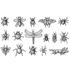 Insects set with beetles bees and spiders vector