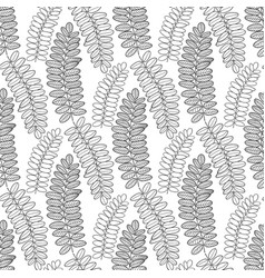 seamless pattern with acacia leaves line art vector image vector image