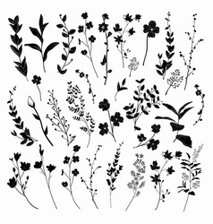 black drawn herbs plants and flowers vector image vector image