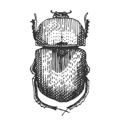 Beetle insect species isolated engraved hand vector