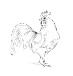 Rooster black and white vector image vector image