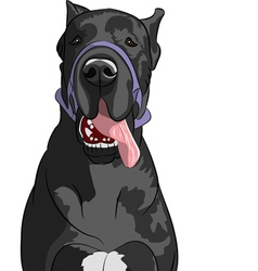 Great dane vector