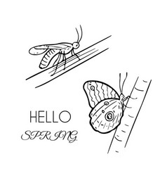 set of insects grasshopper and butterfly on vector image