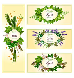 vecor banners of garden spices and herbs vector image