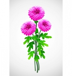 Bouquet of red flower chrysanthemum vector
