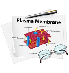 Paper showing plasma membrane drawing vector