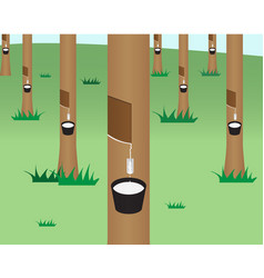 Rubber tree jungle in flat style vector