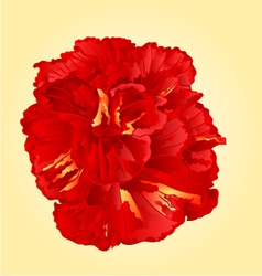 Tropical flower red hibiscus blossom simple flower vector image