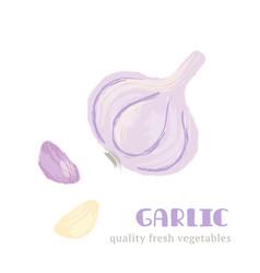 Fresh garlic isolated on white background vector