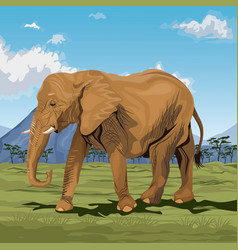 colorful scene african landscape with elephant vector image vector image