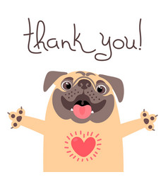 cute dog says thank you pug with heart full of vector image
