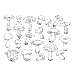 Freehand drawing mushrooms items vector