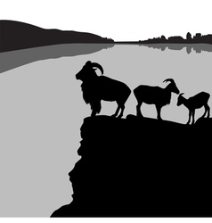 Barbary sheep vector image