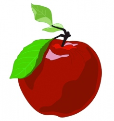 apple drawing vector image