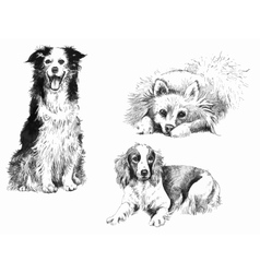 Hand-drown inked dogs set vector image