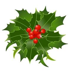 Christmas holly berry vector