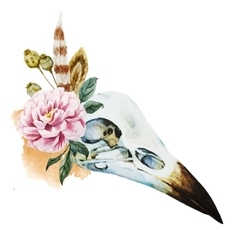 Watercolor bird skull vector