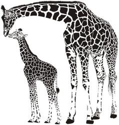 Animal family of giraffes vector