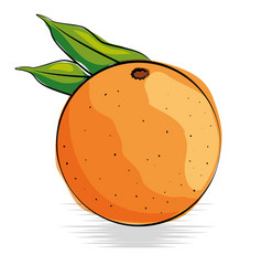 orange fresh and healthy fruit vector image vector image